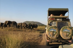 Elephants-in-Tarangire-during-game-drive